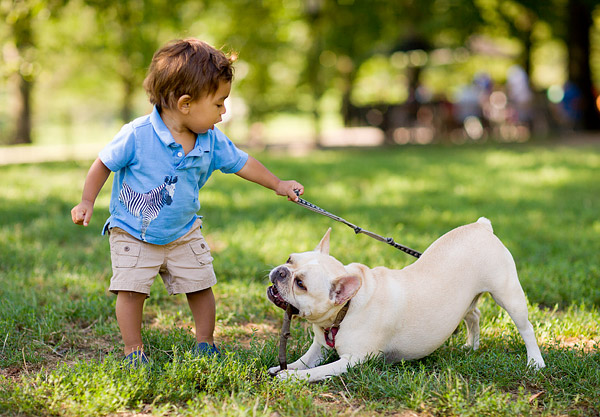 Noah walking Jackson in Central Park.