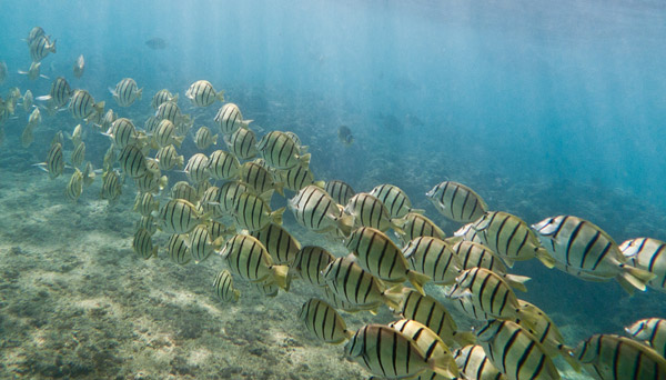 School of Convict Tangs