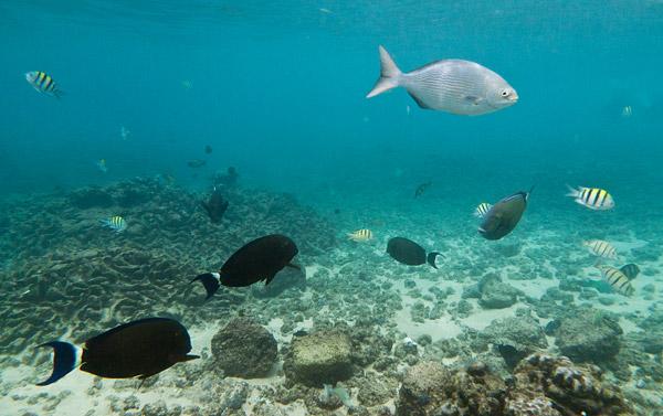 Tropical fish in Kauai, Hawaii