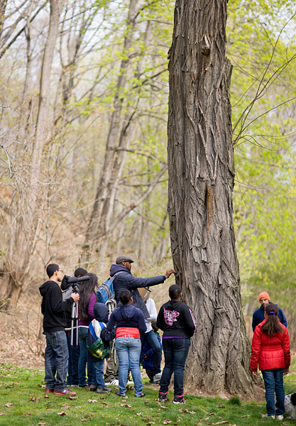 A hike through Highbridge Park to look at trees