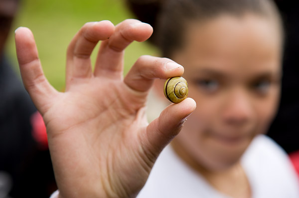 Snails in Highbridge Park
