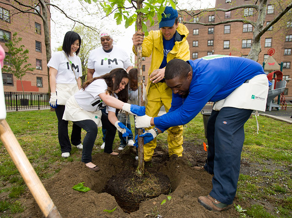 Planting trees in the Bronx