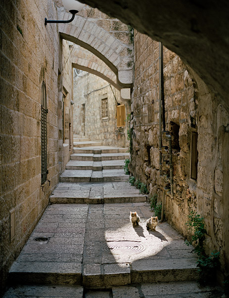 A pair of stray cats keep warm on a cool winter day in the Old City of Jerusalem