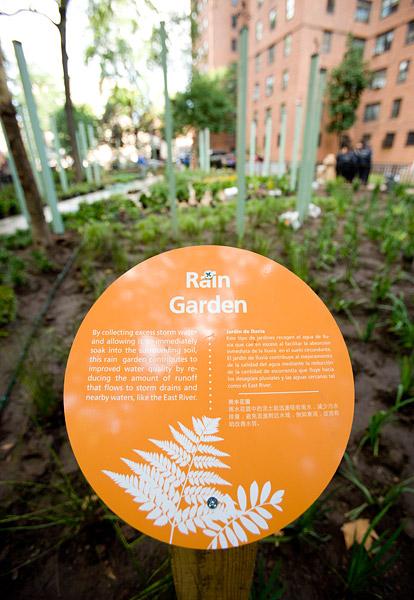 Rain Garden in Planters Grove