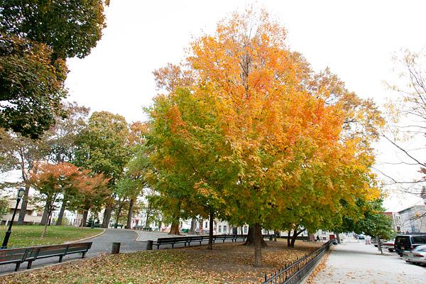 Brower Park in Autumn