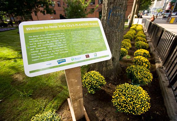 Plants Grove in Lower East Side