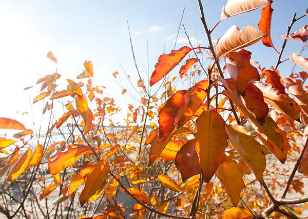 Plumb Beach autumn leaves