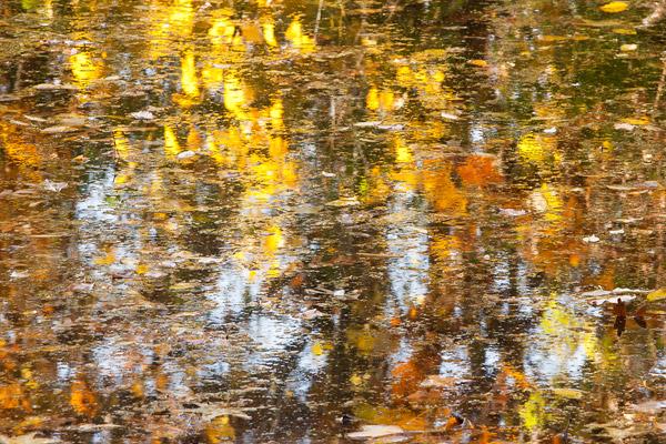 Prospect Park pond