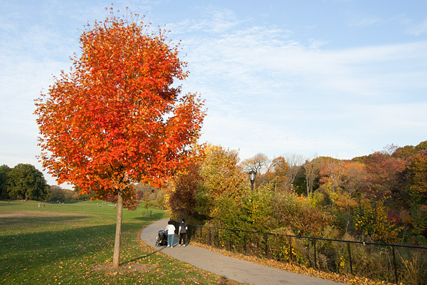 Brooklyn autumn