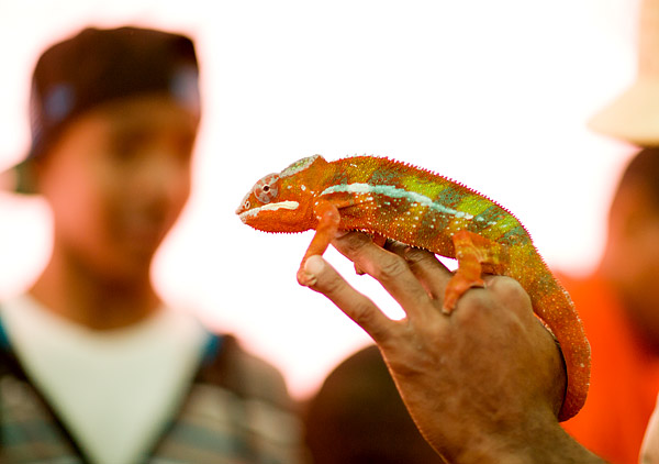 Jaden the Panther Chameleon shows off her colors to kids at New York Restoration Project's NatureMania 2011