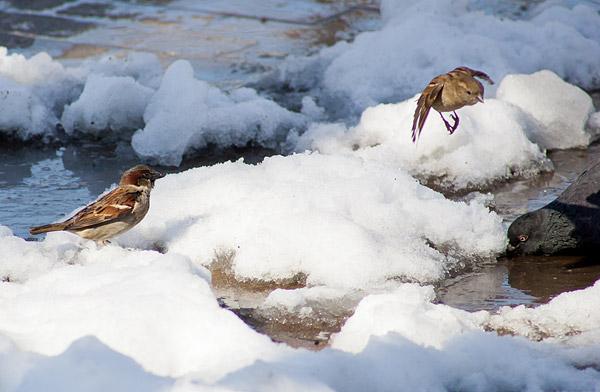 Birds in Brower Park