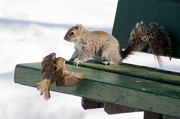 Brower Park bird and squirrel