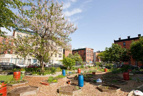 Greene Acres Community Garden, Brooklyn
