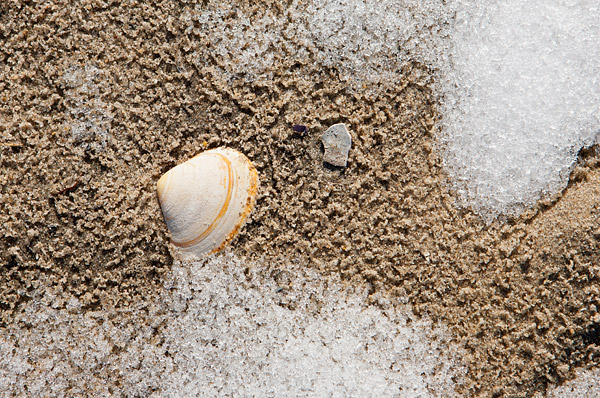 Seashell and snow