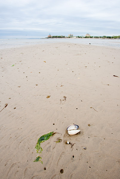 Seashell, Plumb Beach, New York