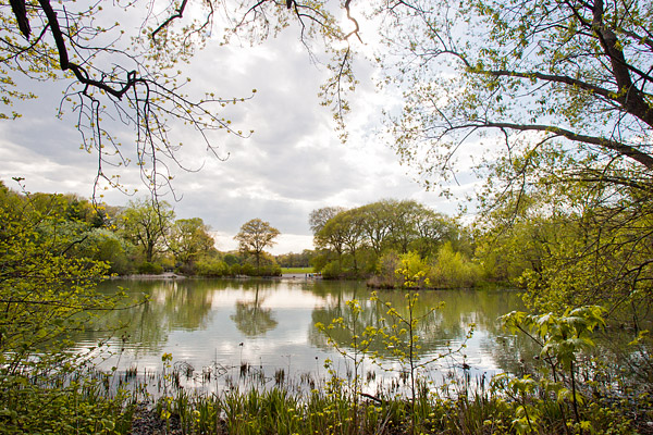 Pond at New York's Prospect Park