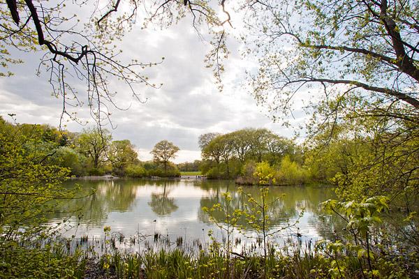 Pond at New York's Prospect Park