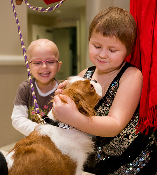 Angel, a Cavalier King Charles Spaniel therapy dog, visits kids at Ronald McDonald House New York