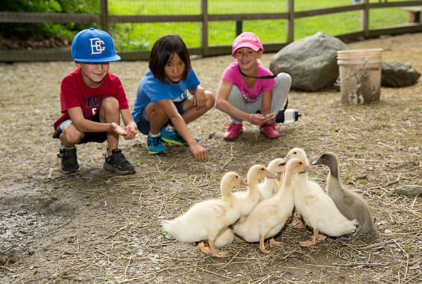 Summer camp ducks